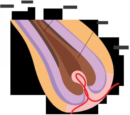 sezione-en